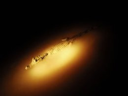 Refugio_Amazonas_Croc_in_water_at_night.jpg