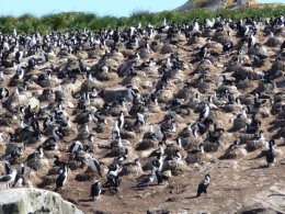 Ushuaia_Bird_Colony.jpg